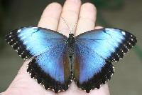 Riapre la casa delle farfalle a modica